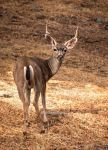 Bum end of the buck by kayaksailor