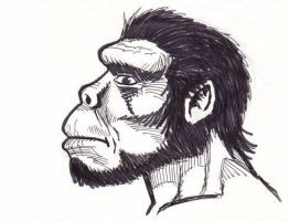 Australopithecus afarensis II by Cousture