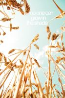 Grow by Cubel