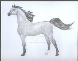 The Arabian Horse by EliteWarHorse