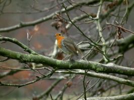 boathouse robin by harrietbaxter