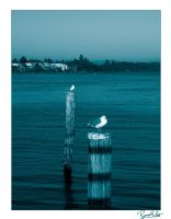 Seagulls by Tantas