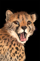 Speedpaint: Cheetah by TheElvishDevil