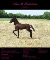 Horse Stock 003 - Friesian by MiszD