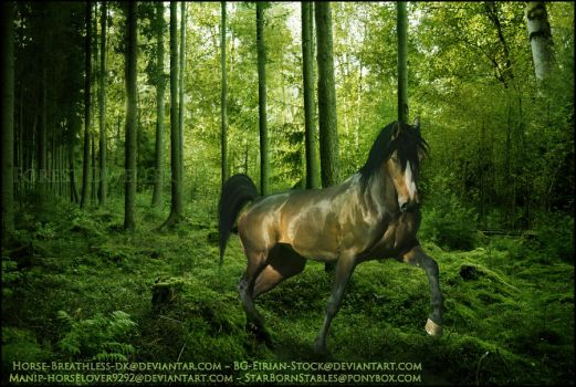 Forest Dweller by horselover9292