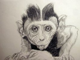 baby monkey by chrisravensar