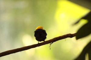 yellow and black by gabitur