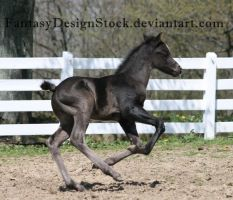 Foal-Carl 18 by FantasyDesignStock