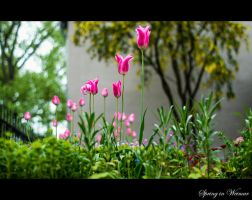 Spring in Weimar by calimer00