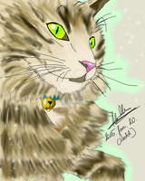 Main Coon cat by MrsCromwell