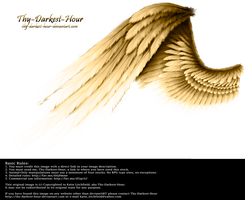 Contrast Wing - Golden by Thy-Darkest-Hour