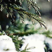 bokeh morning. by magnesina