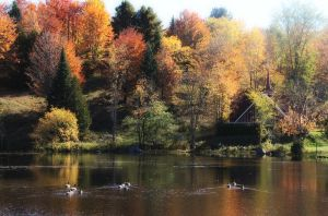 Lac Olier, a l'automne by design-genial