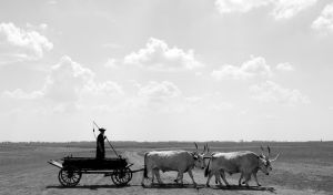Cattle and Cart by Sammydemon