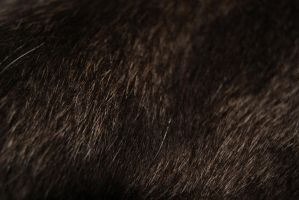 Cat-FurTexture-Stock by Rainny-Stock