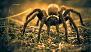 Kingdom of the Spiders by PaulBrozenich