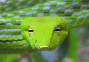 green whip snake by DRniteshade