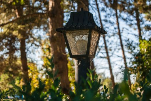 Lamppost in the Trees by Stargazer1312