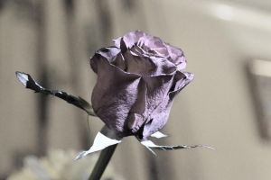 Dusted Purple by Lottie-Photography