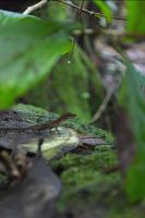 Lizard by Alkhumeia
