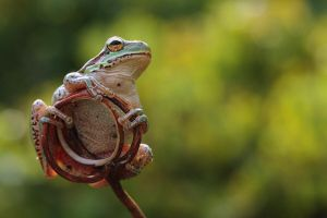 cute tree frog by lisans