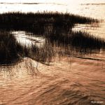 Les Herbes Amarrees au Rivage by hyneige