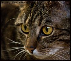 cat portrait by morho