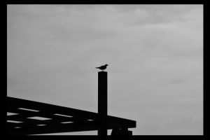 Sea Gull by onurkaya