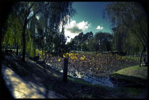 Pond by alcohobo
