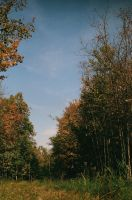 A walk in the woods by Jivka