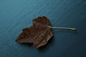 First leaf of fall by lowjacker