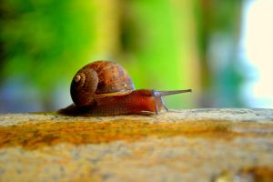 Snail by DuffyGraham