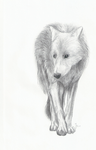 Wolf dedicated by prologica