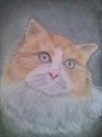 Cat by EpicArtGirl