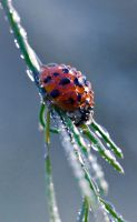 Sleeping in morning dew...III by Baepfelchen