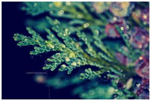 Cold Winter Droplets by lizabif-f