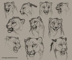 Dey - Head Sketches by DeyVarah