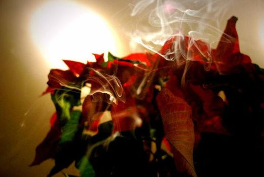 flowers and smoke by thrillhasgonst