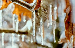 "Ice Storm ""January"" by Annetteks"