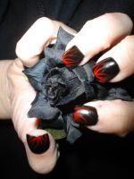 Black Rose And Nails 1 by InToXiCaTeD--StOcK
