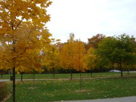 Canadian Fall Colours 50 by Aswang301