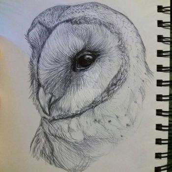 Barn owl biro sketch by SavouryChaffinch
