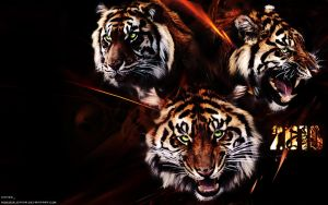 Tigers 2010 by roguesleipnir