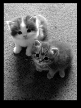 bnw kittens by tasteslikebrning