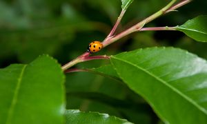 _another ladybug by un-kno-wn