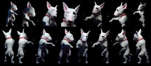 Bull Terrier Sculpt: Painted by rgyoung