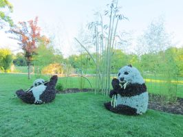 Mosaic Living Sculpture - Pandas by Kitteh-Pawz