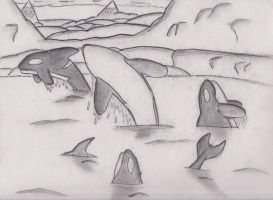 killer whales by ShadeAkamarie