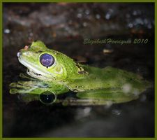 Little Green Frog by mariquasunbird1