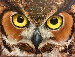 Great Horned Owl (2015) by KimberlySchultz